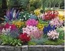 Découvrir les fleurs vivaces