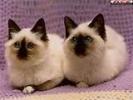 Garder un chat , deux chats,trois chats....